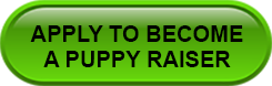 apply to become a puppy raiser